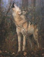 howl3