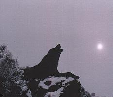howl4